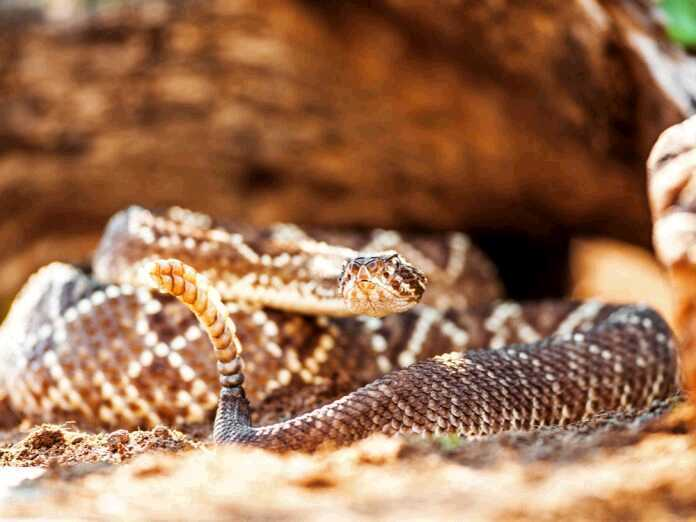 snake venom and hepatitis C