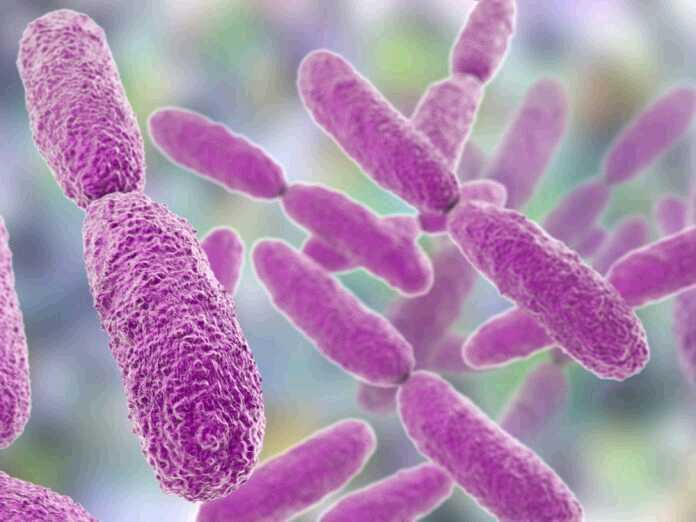 klebsiella oxytoca symptoms