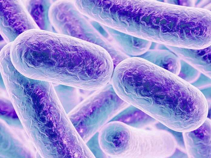 immune system detects bacteria