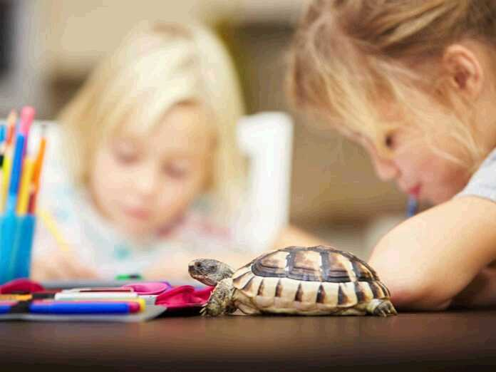 bacterial infection from your turtle