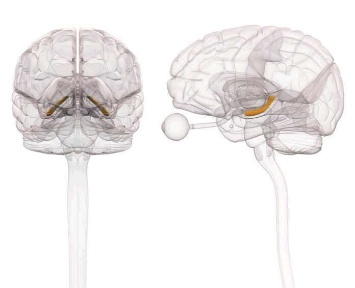 area of the brain affected by the flu